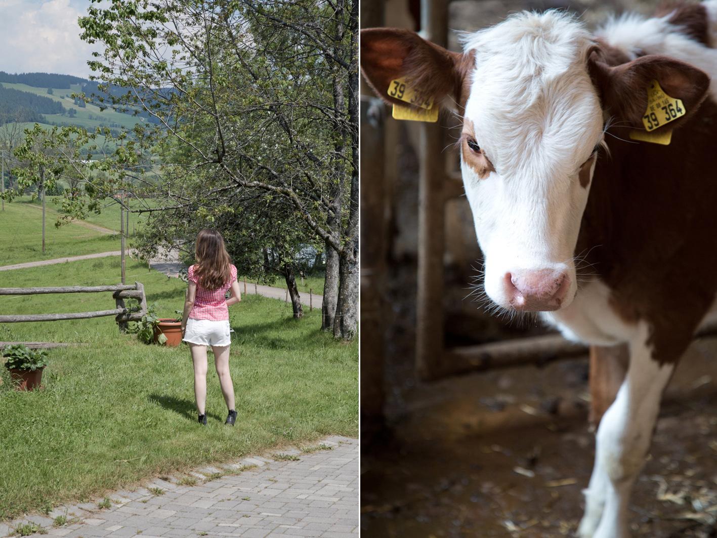 Besuch auf einem Milchhof