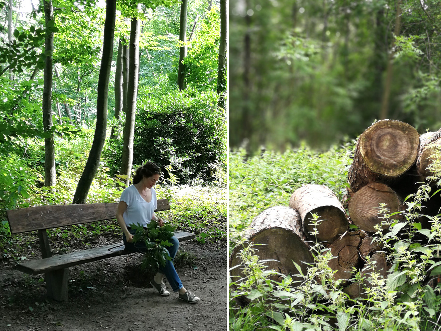 Waldspaziergang Düsseldorf