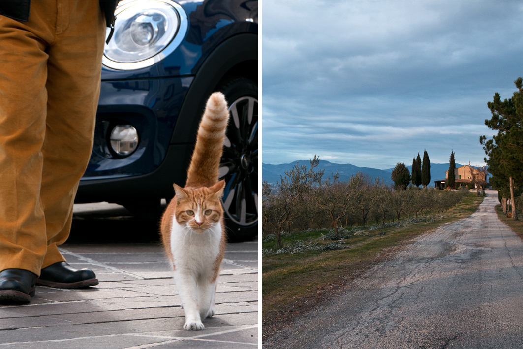 montefalco Katze