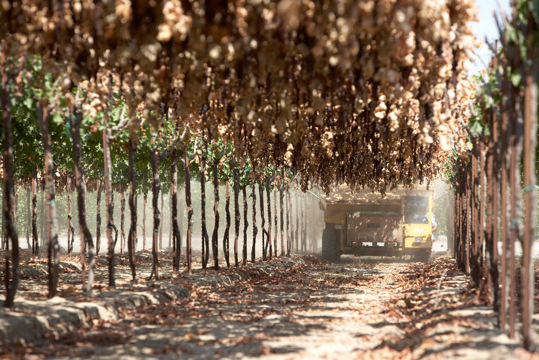 CRMB harvest & growers' portraits