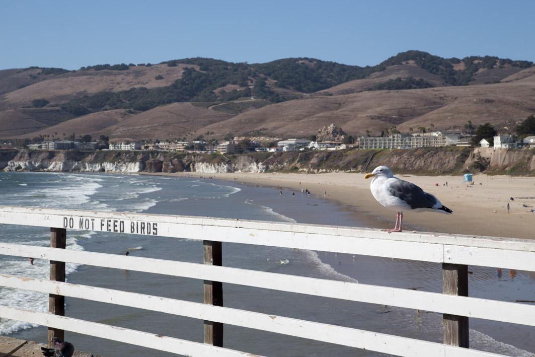 pier pismo beach