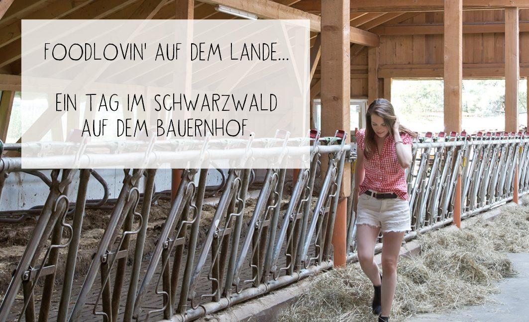 Wo kommt eigentlich unsere Milch her? Aus dem Schwarzwald!