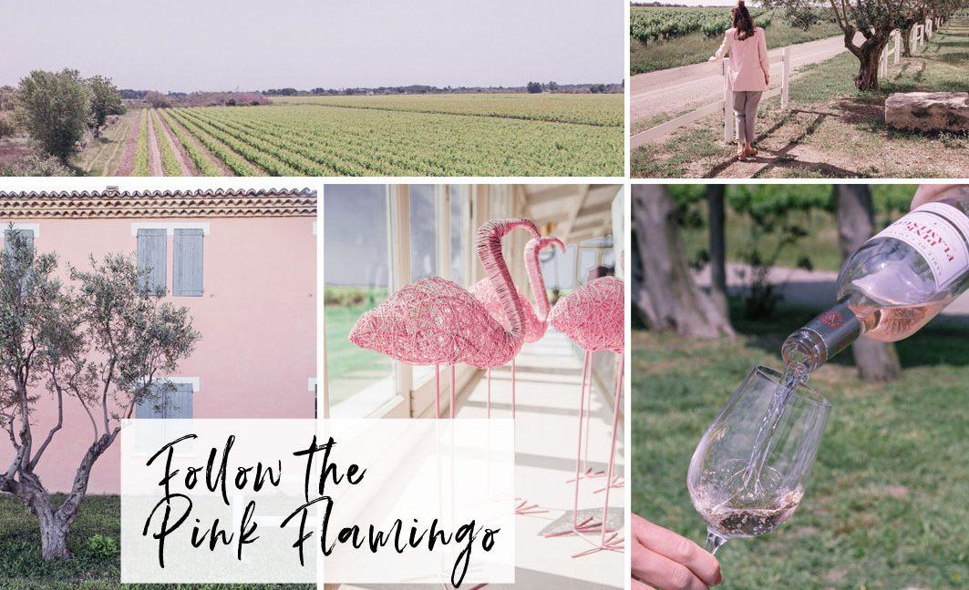 Follow the Pink Flamingo