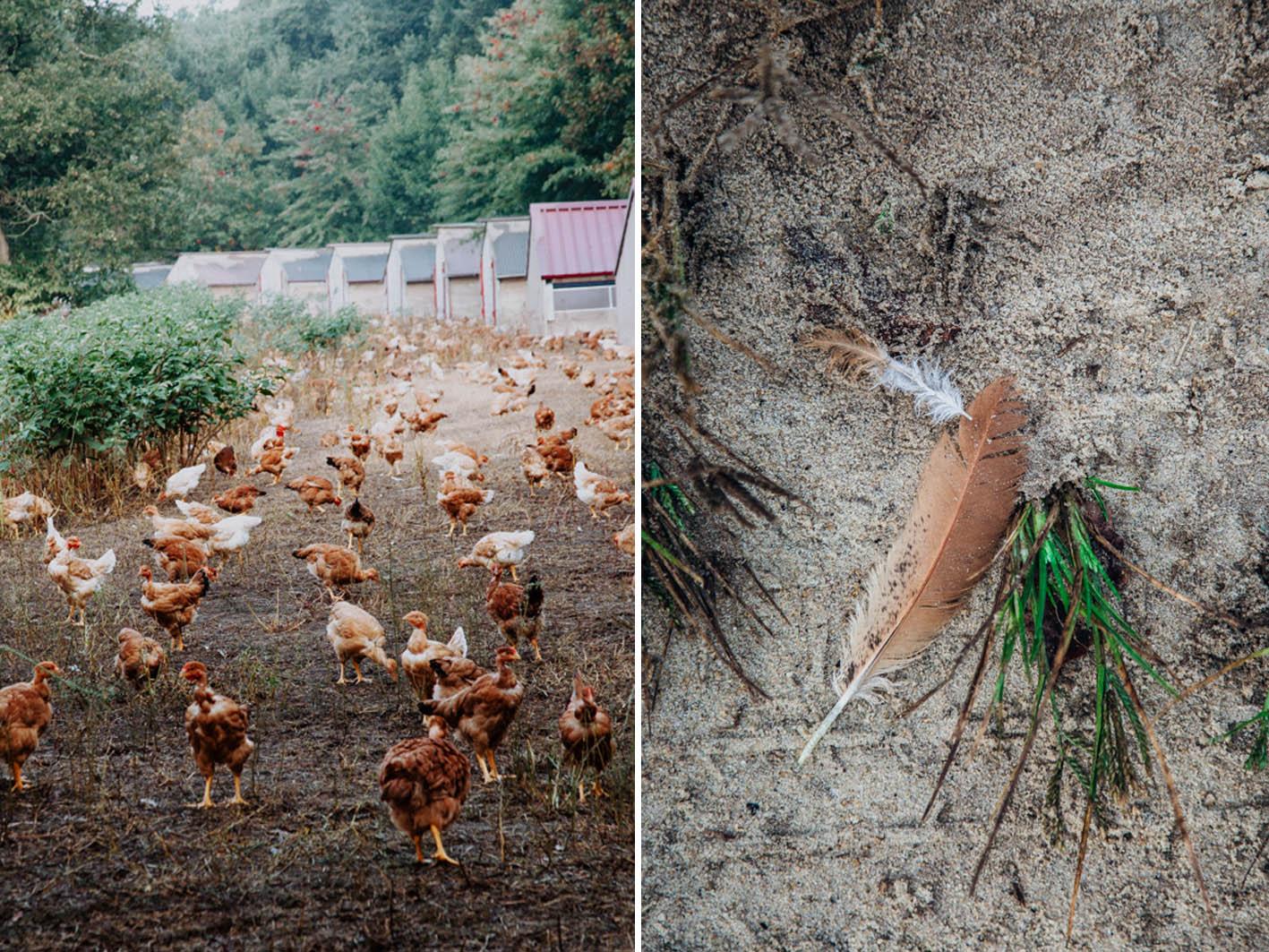 Hühnerhof in Frankreich