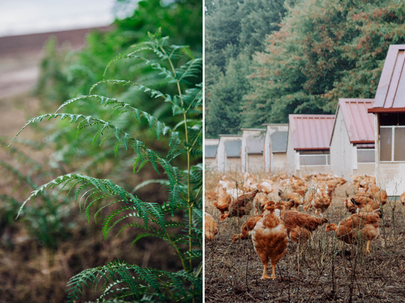 Hühnerhof in Les Landes