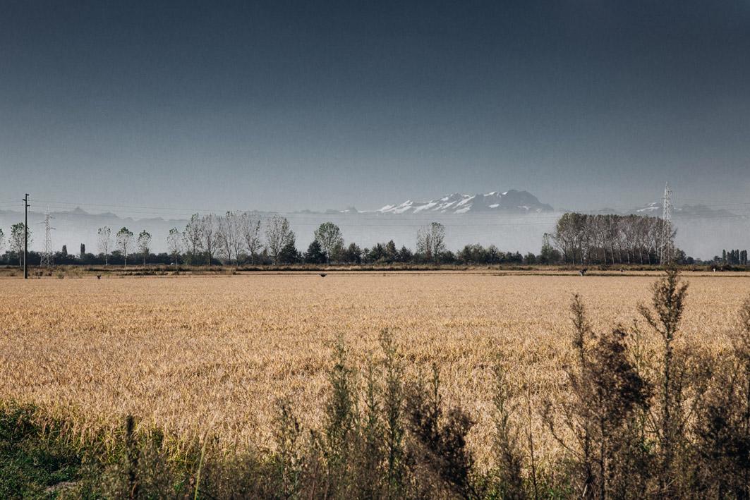 Reisfelder Norditalien