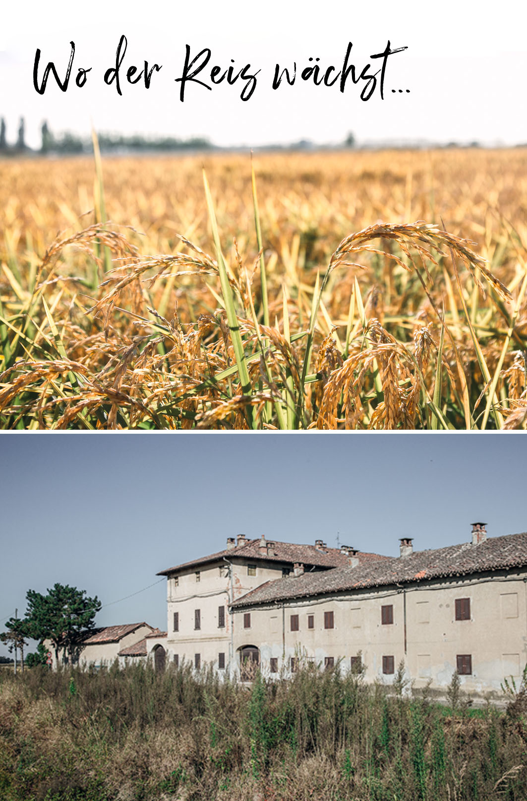 Reisfelder in Italien